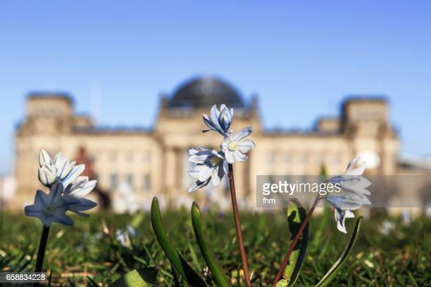 Spring in Berlin - spring flowers with unsharp Reichstag building in the background (Berlin, Germany)