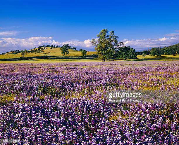 Primavera na Califórnia