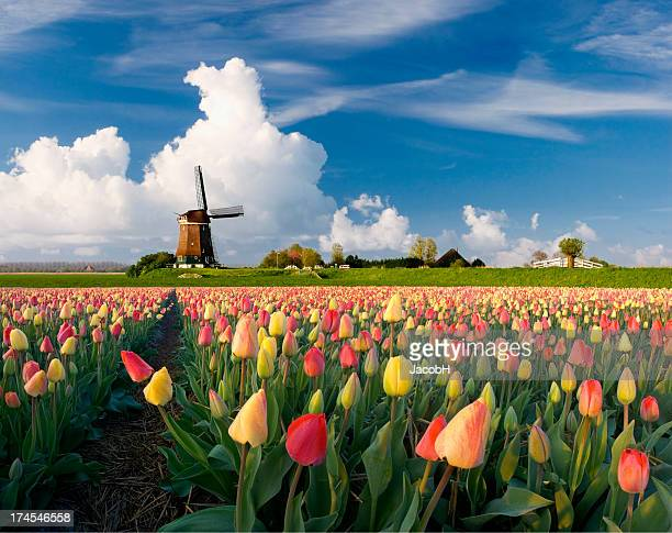 spring in holland - netherlands stock pictures, royalty-free photos & images