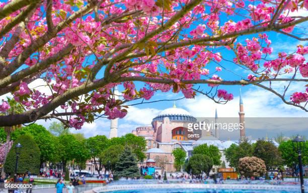 primavera em istambul, turquia - istambul - fotografias e filmes do acervo