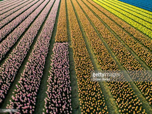 spring in netherlands - bortes stock photos and pictures
