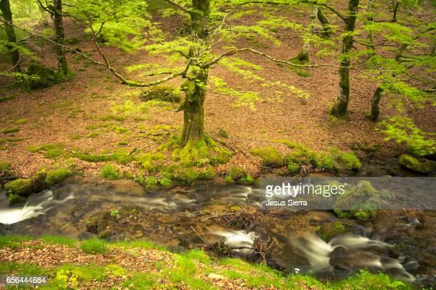 spring in selva de irati, navarre, spain. - comunidad foral de navarra fotografías e imágenes de stock