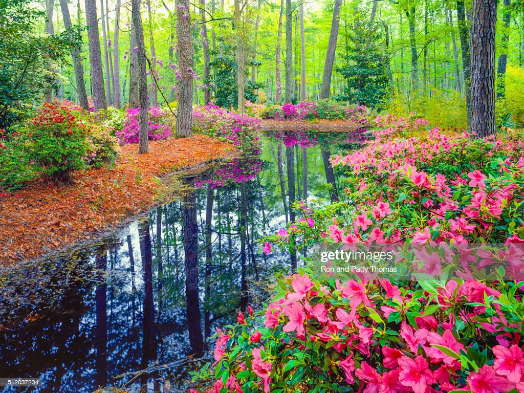 Spring in Southern Woodland Garden : Stock Photo