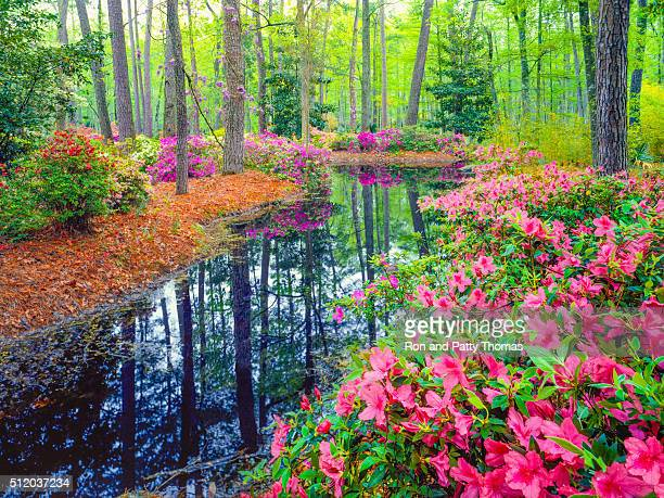 spring in southern woodland garden - landscaped stock pictures, royalty-free photos & images