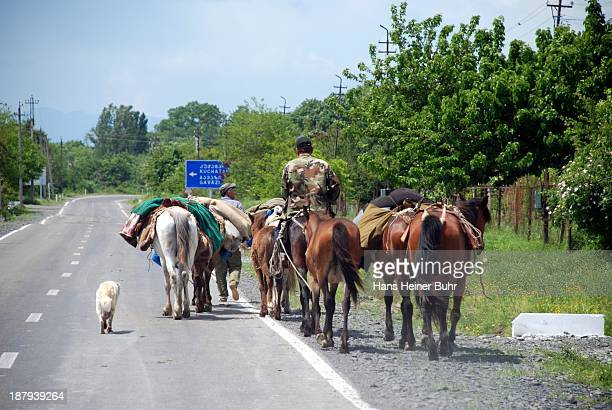 CONTENT] Spring in the Wine region Kakheti Shepherds going with their horses and a dog along a newly paved road to the village Alvani