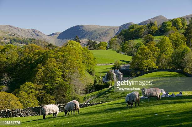 spring in troutbeck valley with the kentmere fells beyond, in the scenic lake district - lake district stockfoto's en -beelden