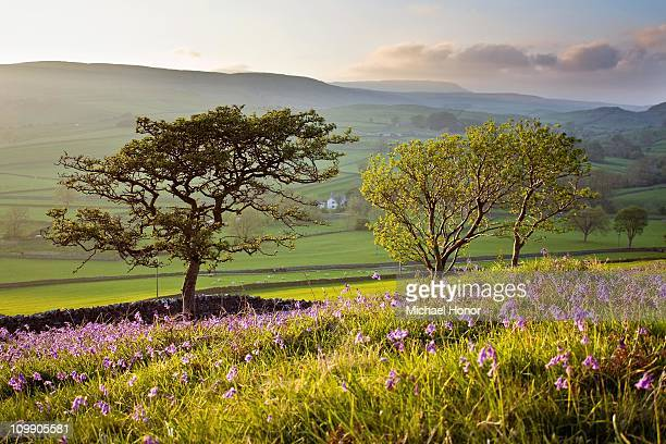 spring in yorkshire - bluebell stock pictures, royalty-free photos & images