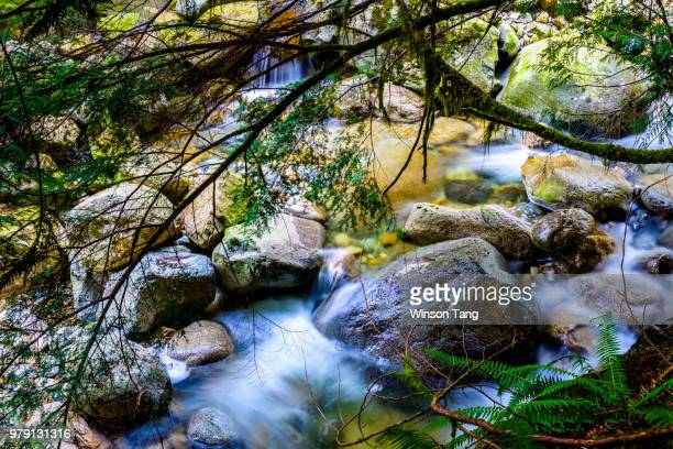 spring is coming soon to a creek near you! - coming soon stock pictures, royalty-free photos & images