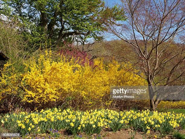 Spring is Here-NJBG