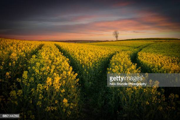 spring is in the air - jutland stock photos and pictures