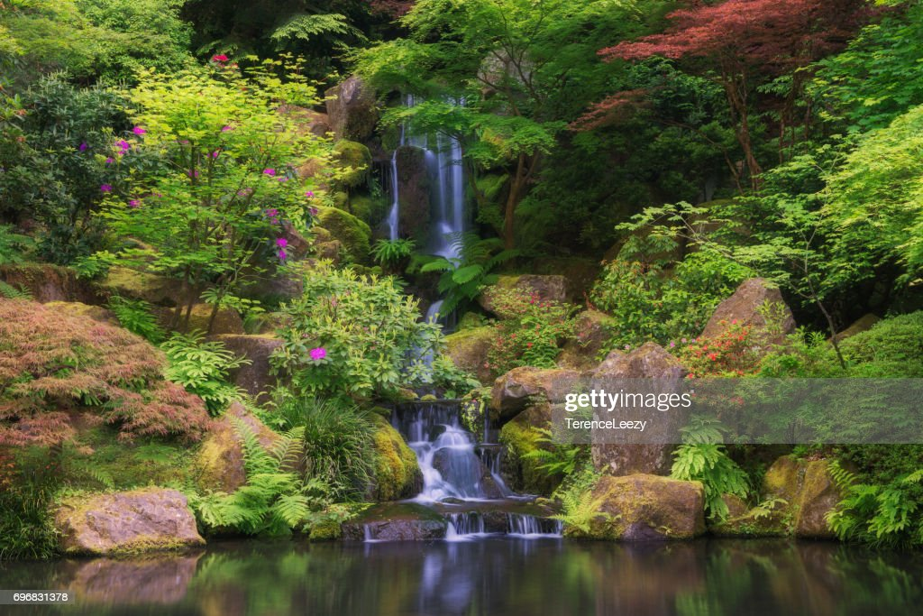 Spring Japanese Garden with Waterfall : Stock Photo