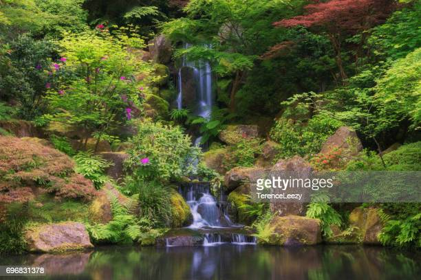 spring japanese garden with waterfall - japanese garden stock photos and pictures