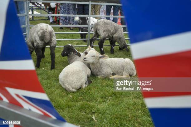 Spring lambs are one of the attractions on Chapel Row village green the home village of Kate Middleton near Bucklebury