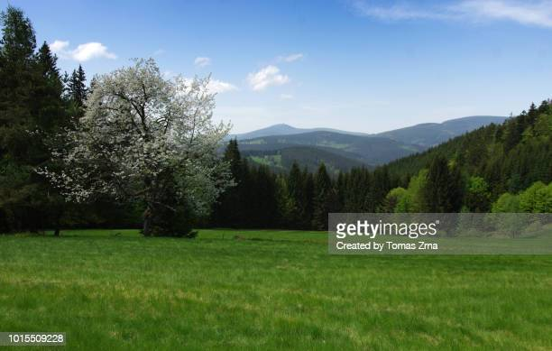 spring landscape at byčinec nature monument during a sunny may day - may stock pictures, royalty-free photos & images