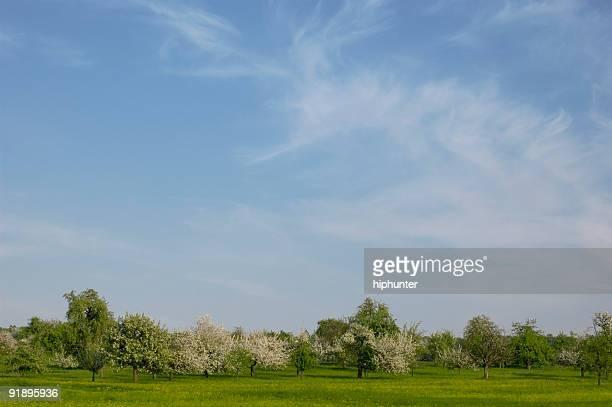 Paisagem de Primavera flor, relva verde e céu azul de árvores,