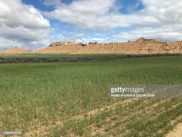 spring landscape in bardenas reales, navarre - pinnacle peak stock pictures, royalty-free photos & images