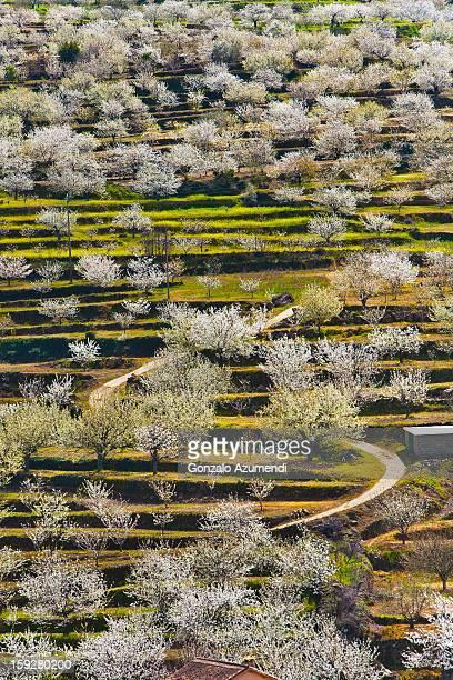 spring landscape in the jerte valley. - valle fotografías e imágenes de stock