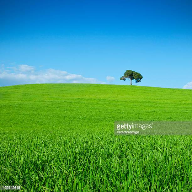 Spring landscape: lonely tree