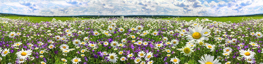 spring landscape panorama with flowering flowers on meadow 915310968