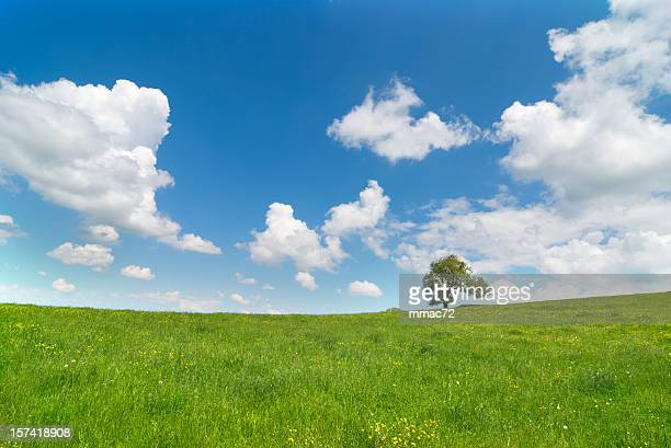 spring landscape - grass area stock pictures, royalty-free photos & images
