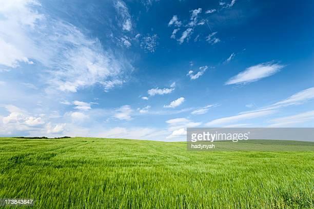Frühling Landschaft