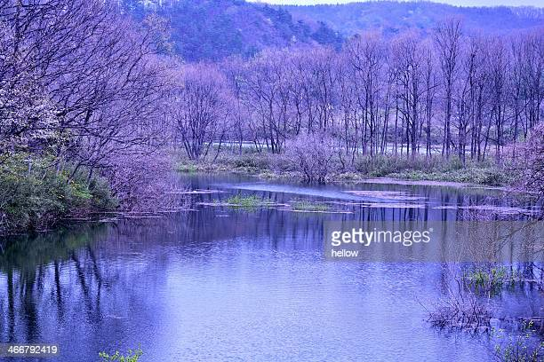 spring landscape - miyagi prefecture stock pictures, royalty-free photos & images