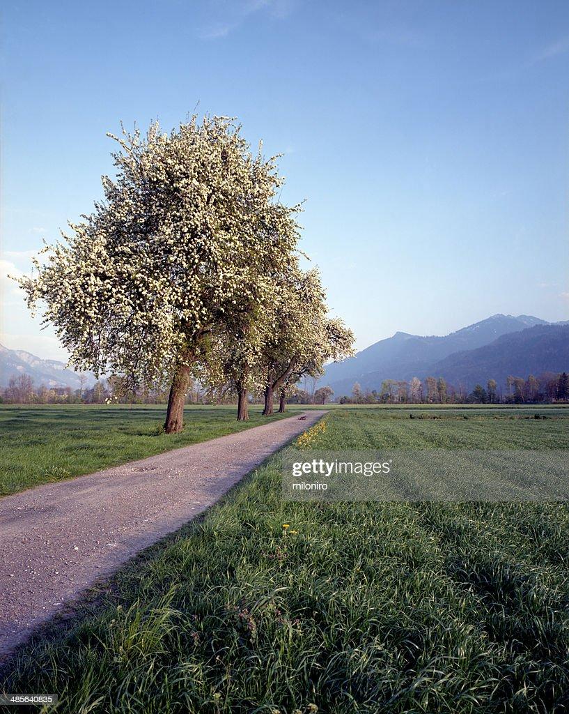 Spring Landscape : Stock-Foto