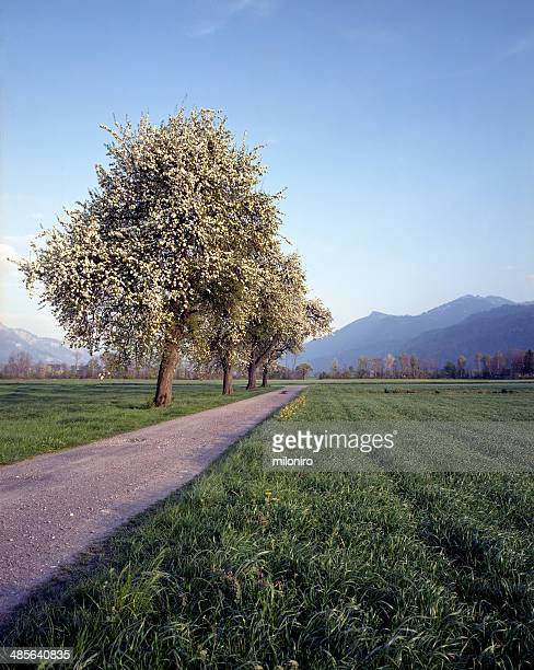 spring landscape - miloniro stock pictures, royalty-free photos & images
