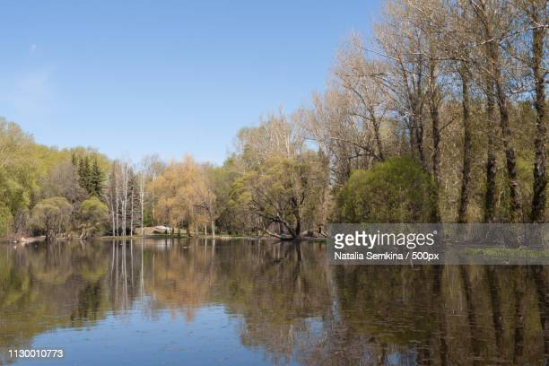 spring landscape trees in urban park and their reflection in th - arboreto foto e immagini stock