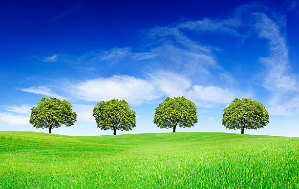 Spring landscape - Trees on green field