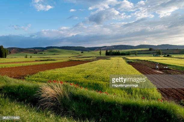 Spring landscape with agriculture