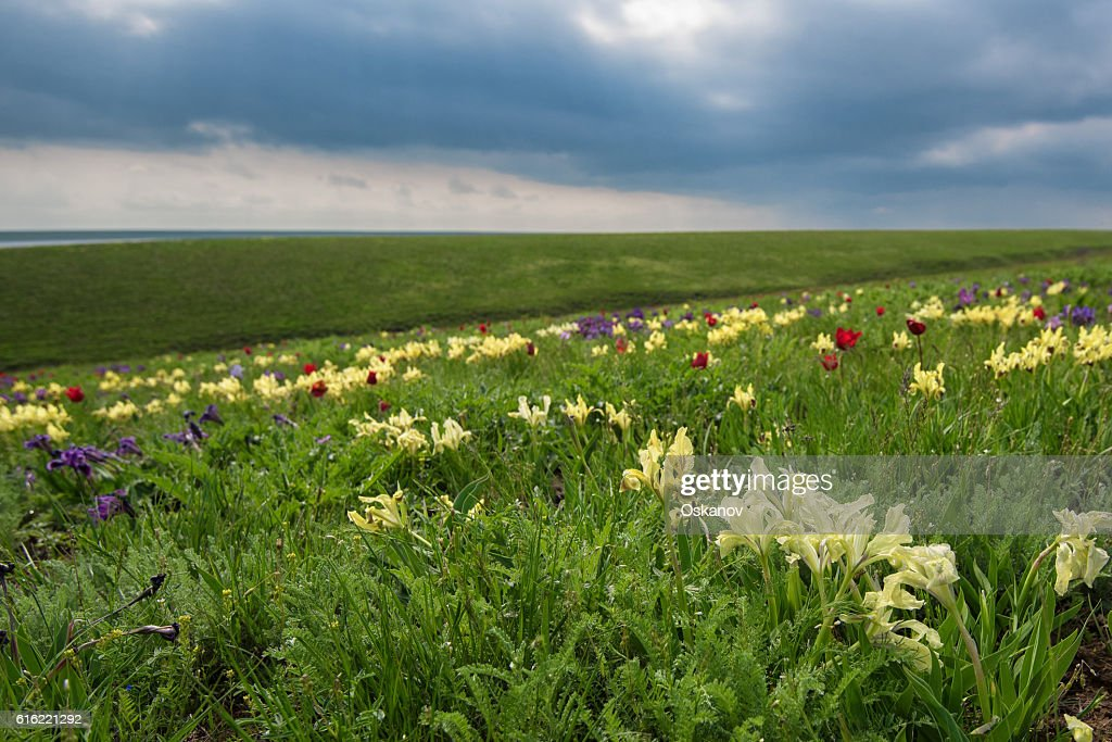 Spring landscape with blossoming wild flowers : Stock Photo