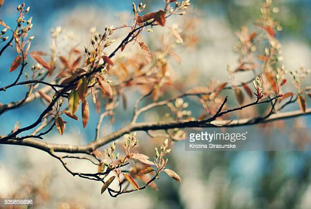 spring leaves on branches