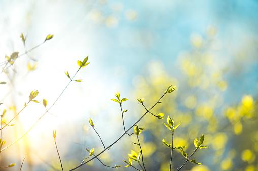 Spring Leaves 891953288