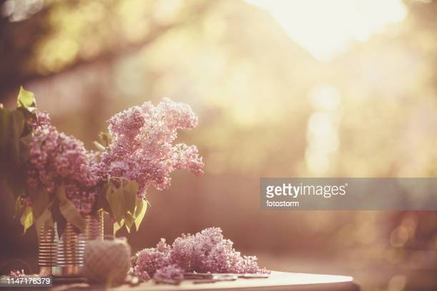 spring lilac flowers - purple lilac stock pictures, royalty-free photos & images