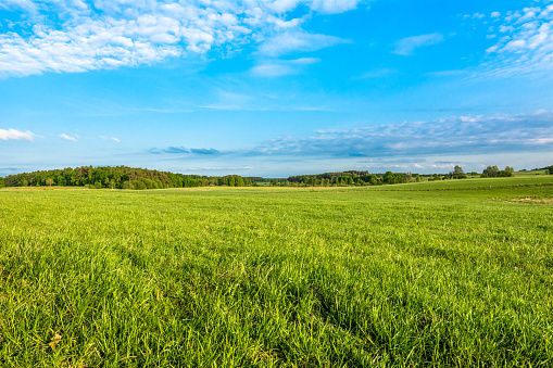 Spring meadow and blue sky over grass field, countryside landscape 905420546