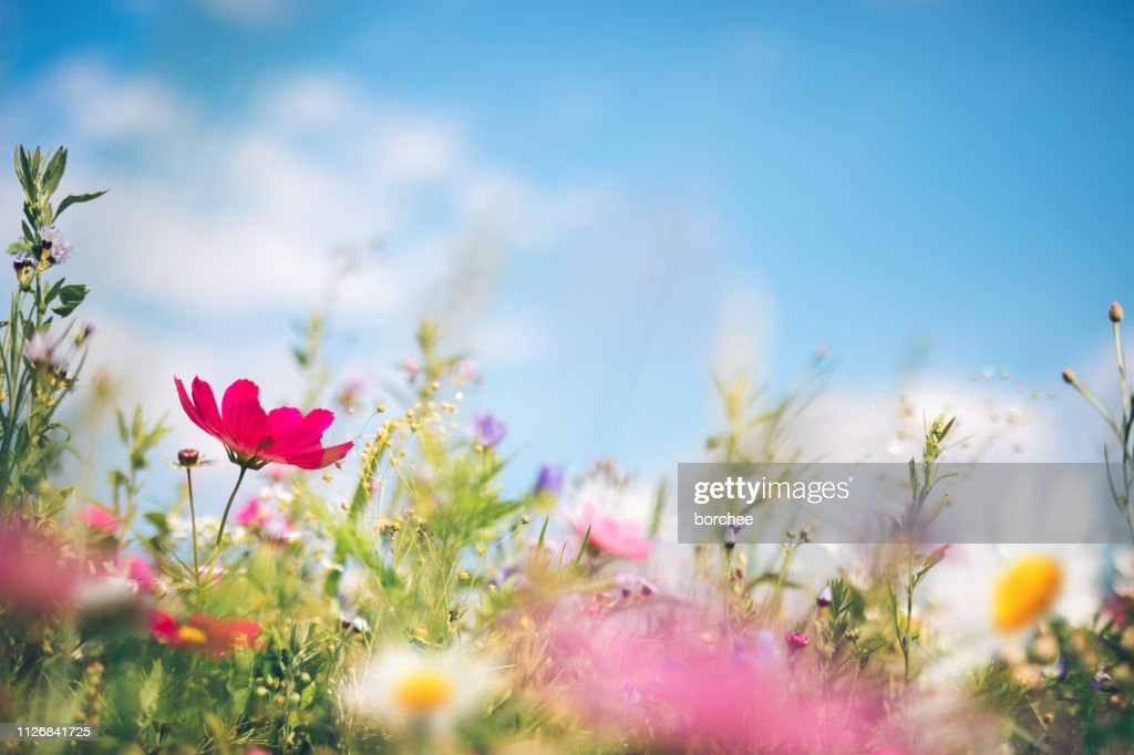 Spring Meadow : Foto stock