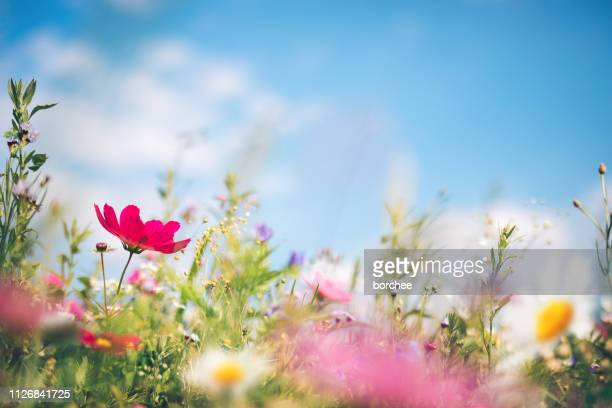 spring meadow - flower wallpaper stock pictures, royalty-free photos & images