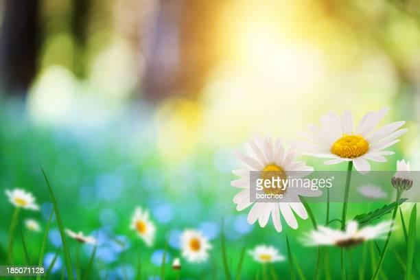 Frühling Meadow