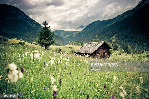 spring meadow with dramatic sky n- tirol, austria- vintage filtered - shack stock pictures, royalty-free photos & images