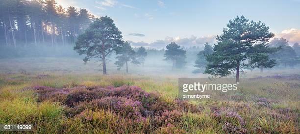 spring mist in heathland near wareham, dorset, england, uk - wareham stock photos and pictures