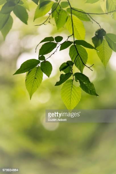 spring miyabi - dustin abbott stock pictures, royalty-free photos & images
