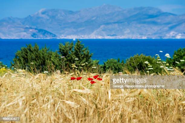 Spring moment in Kos island Greece