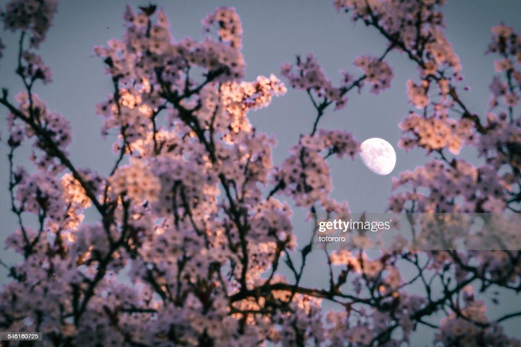 Spring Moon : Foto de stock