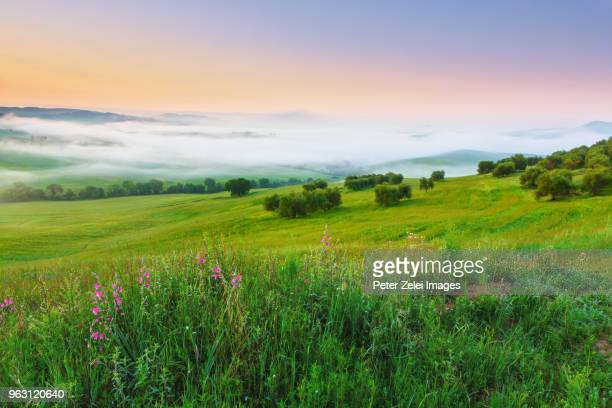 spring morning in the val d'orcia, tuscany, italy - rolling landscape stock pictures, royalty-free photos & images