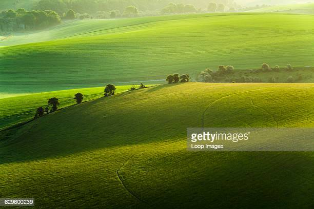 Spring morning on the South Downs Falmer England