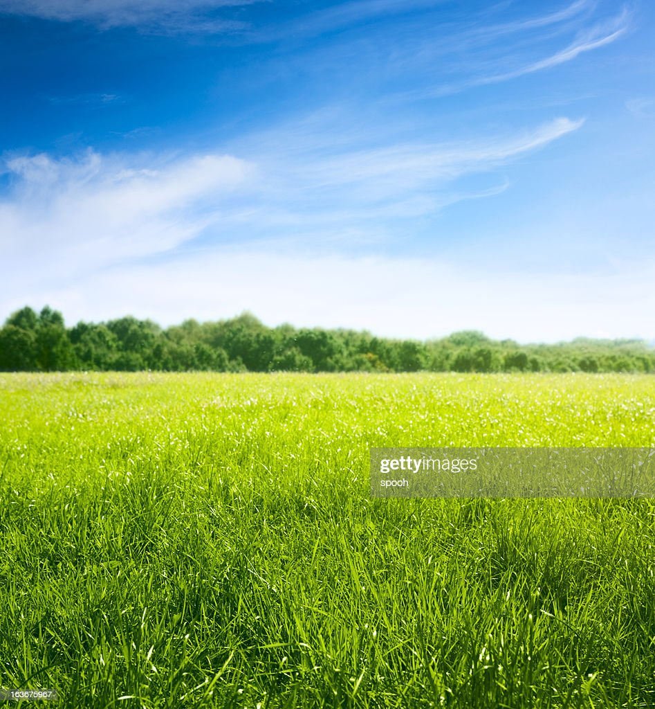 Spring on meadow. Fresh grass and beautiful clouds. : Stock Photo