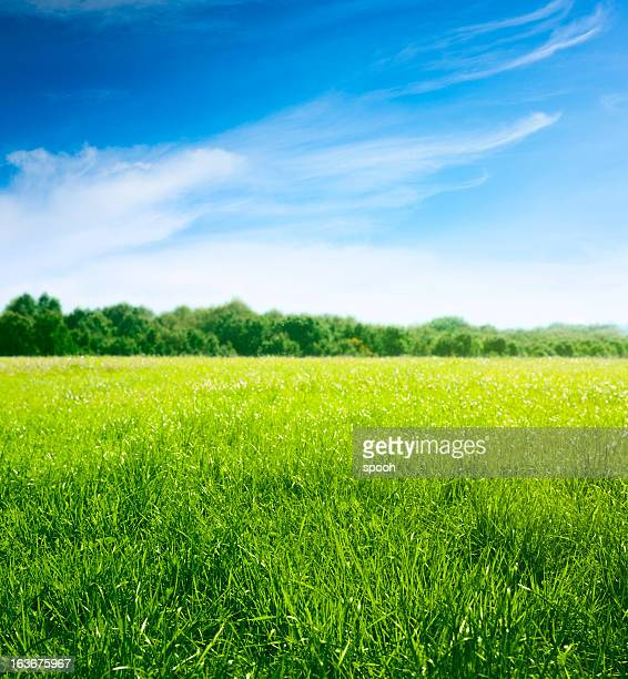 spring on meadow. fresh grass and beautiful clouds. - grass stock pictures, royalty-free photos & images