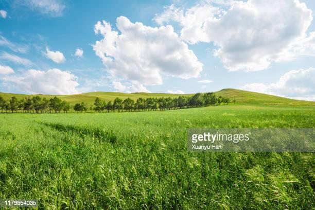 spring on meadow. fresh grass and white clouds - prateria zona erbosa foto e immagini stock