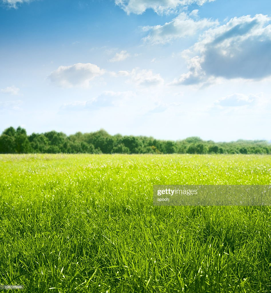 Spring on meadow : Stock Photo